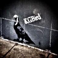 KGBird_ed